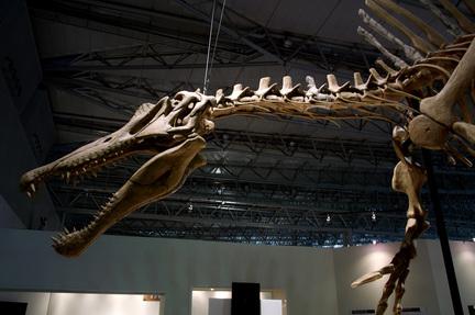 スピノサウルス超巨大2.jpg