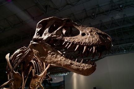 ティラノサウルス3.jpg