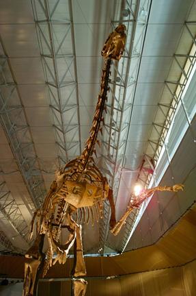 メガラプトル(ドロマエオサウルス類最大).jpg
